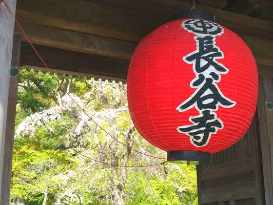 長谷寺 しだれ桜