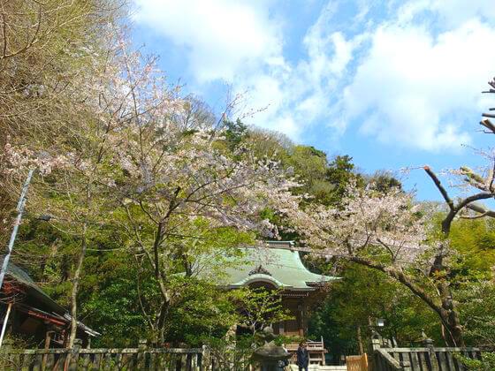 桜 御霊神社 鎌倉