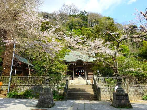 鎌倉 御霊神社 桜