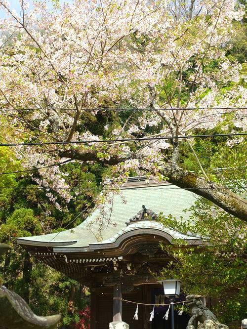 桜 御霊神社