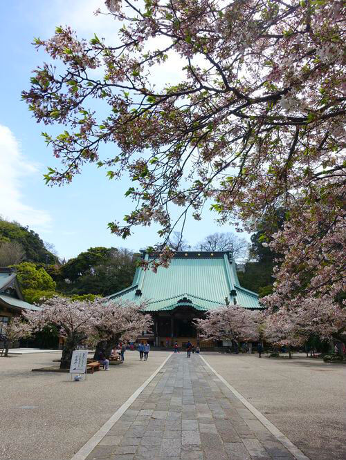 光明寺 鎌倉 桜