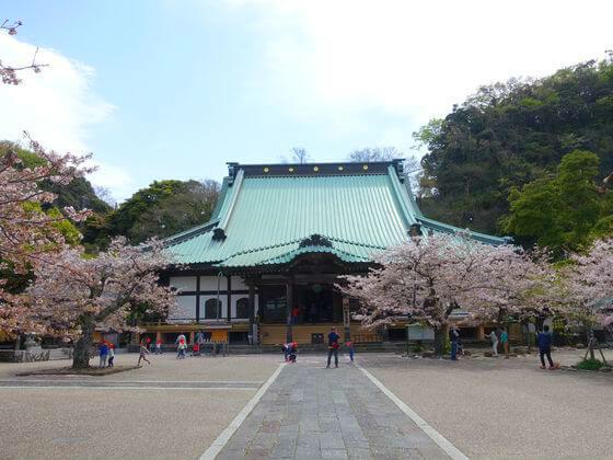鎌倉 光明寺 桜