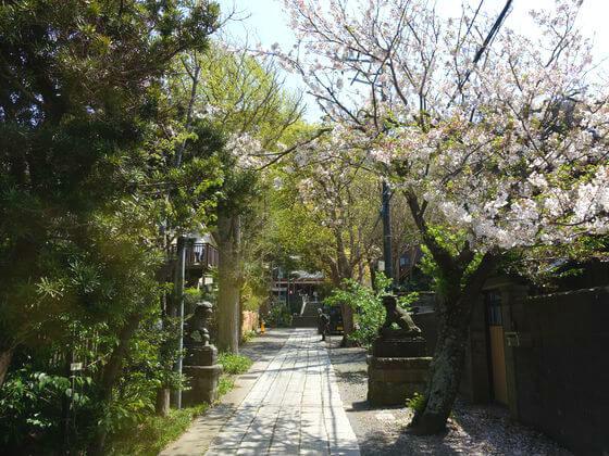 五所神社 鎌倉 サクラ