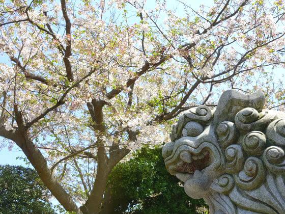 五所神社 桜