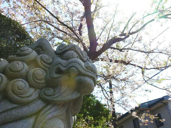 五所神社 鎌倉 桜