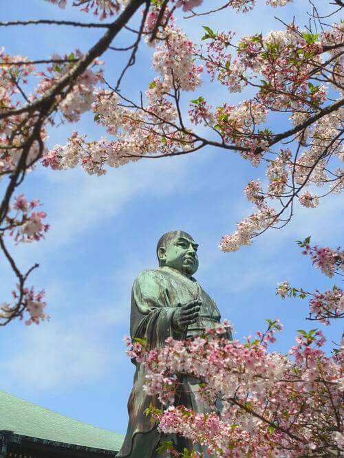 日蓮聖人像 桜