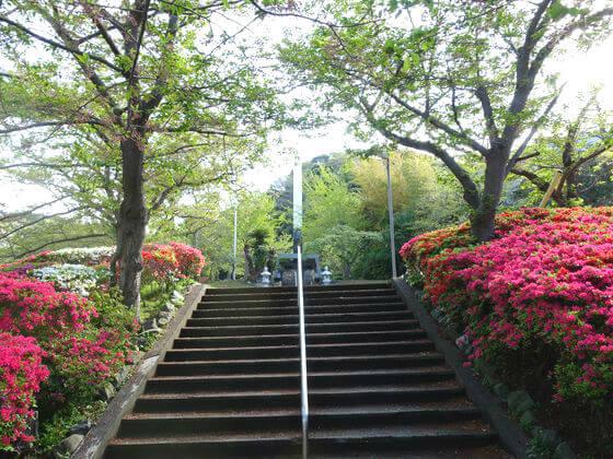 花の木公園 葉山