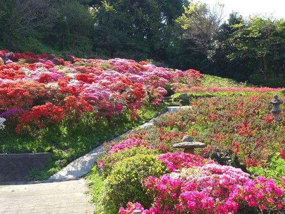 花の木公園 つつじ