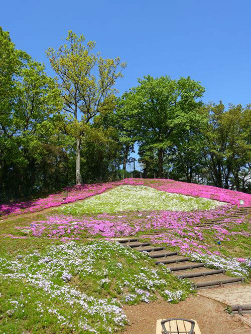 芝桜 吾妻山