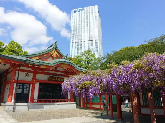 日枝神社 藤棚