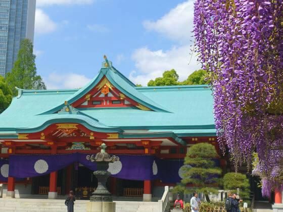 藤棚 日枝神社