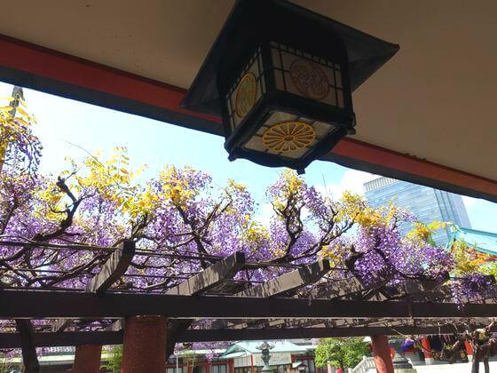 赤坂 日枝神社 藤棚