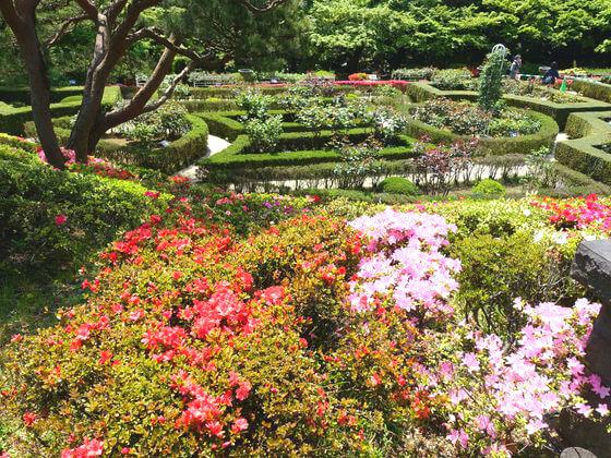 旧古河庭園 躑躅