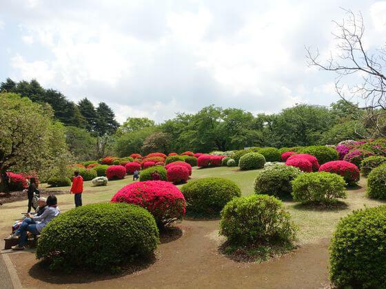 新宿御苑 ツツジ山
