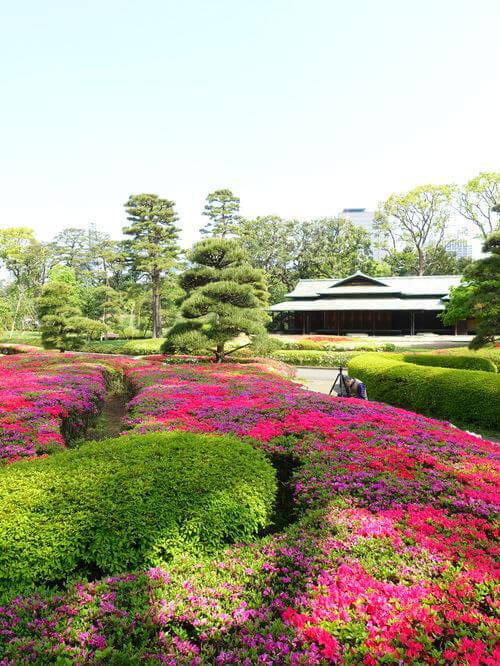 皇居東御苑 諏訪の茶屋 つつじ