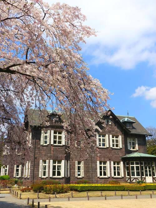 しだれ桜 旧古河庭園