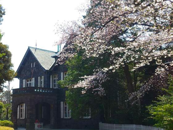 旧古河庭園 ソメイヨシノ