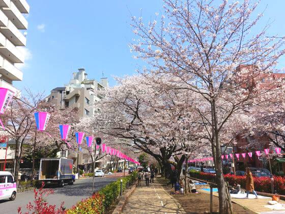 文京区 桜