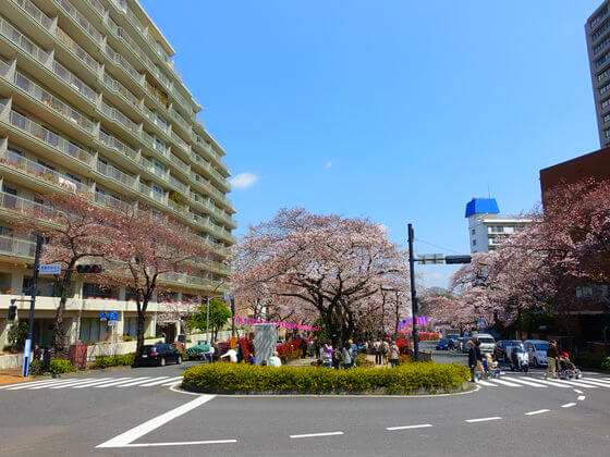 桜 播磨坂