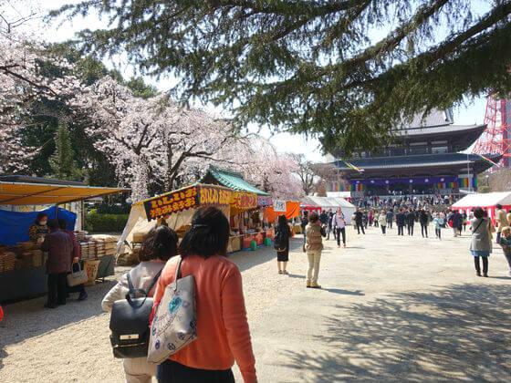 芝公園 増上寺 桜