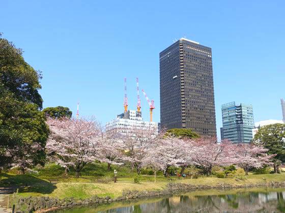 桜 旧芝離宮恩賜庭園