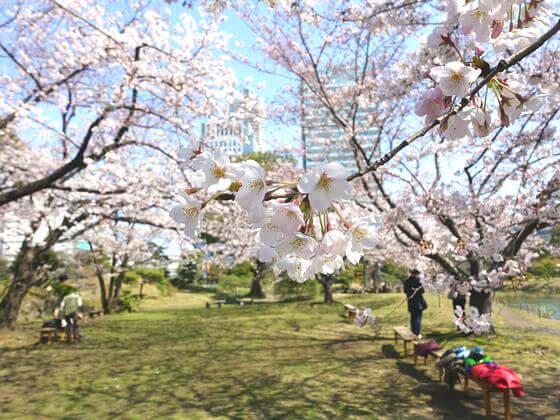 お花見 旧芝離宮恩賜庭園
