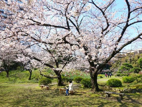 旧芝離宮恩賜庭園 桜 開花状況