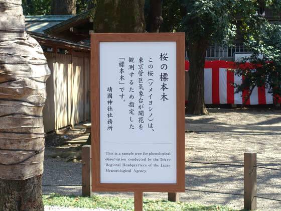 靖国神社 桜の標準木