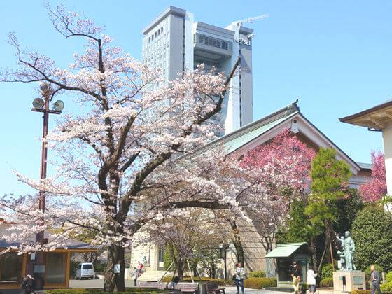 靖国神社 桜 開花状況