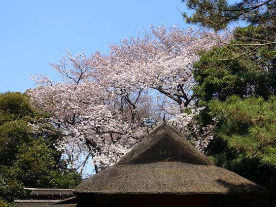 東京国立博物館 春草盧