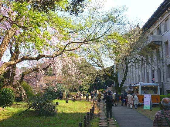 東京国立博物館 枝垂れ桜