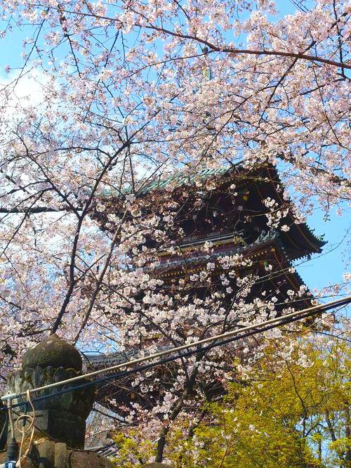 上野 五重塔 桜