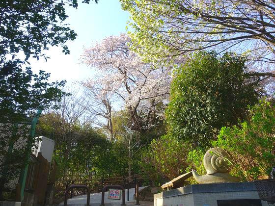 桜 多摩川台公園