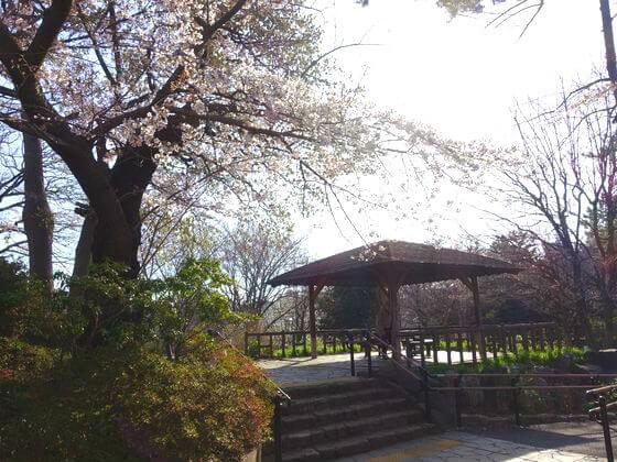 お花見 多摩川台公園