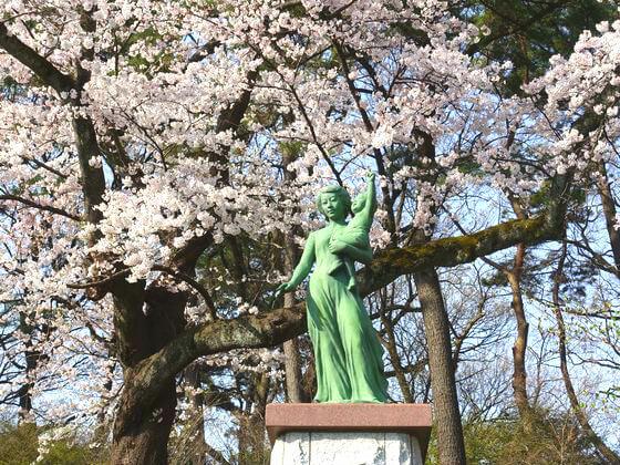 多摩川台公園 桜