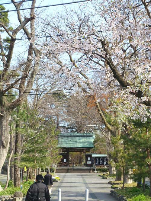 桜 九品仏