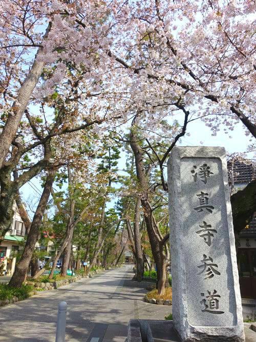 九品仏 桜