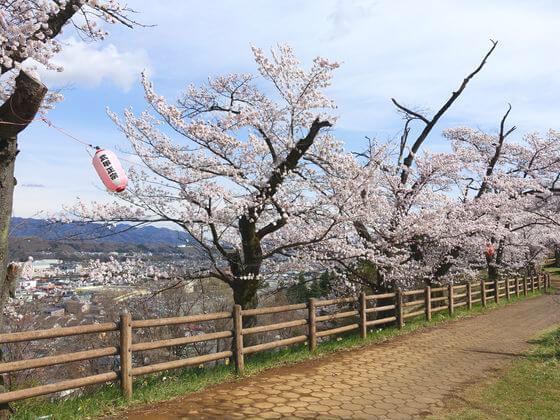 羊山公園 見晴しの丘 桜