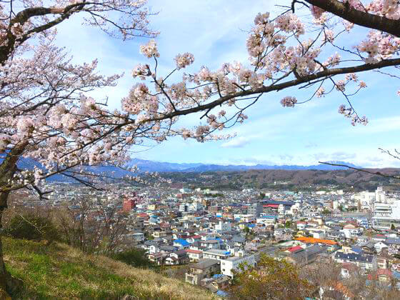 見晴しの丘 桜