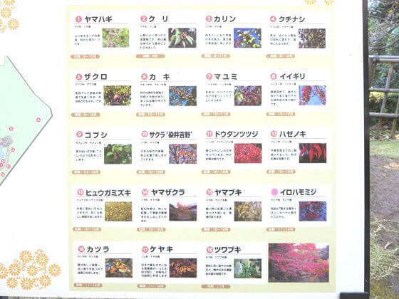 池田山公園 花