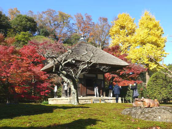 長寿寺 鎌倉 紅葉