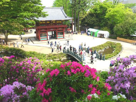 つつじ 根津神社