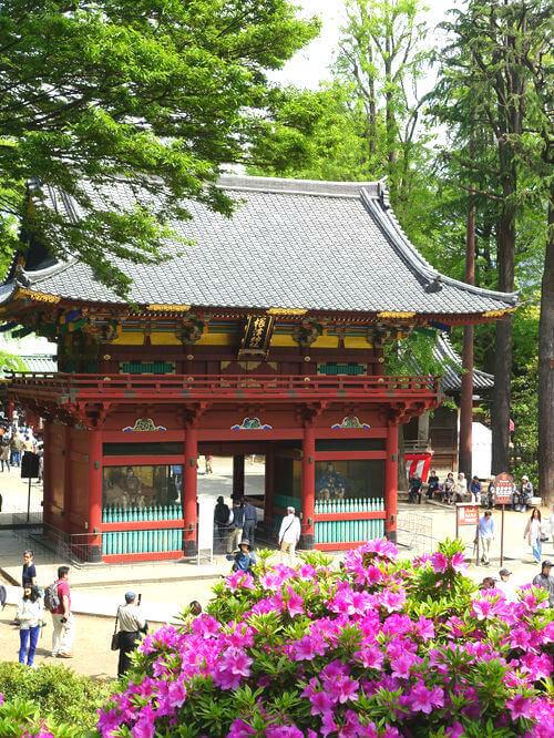 根津神社 躑躅
