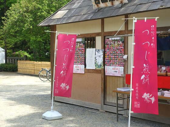 根津神社つつじ祭り