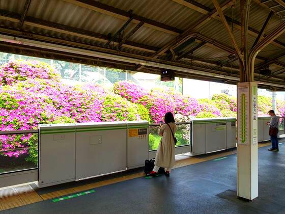 躑躅 駒込駅