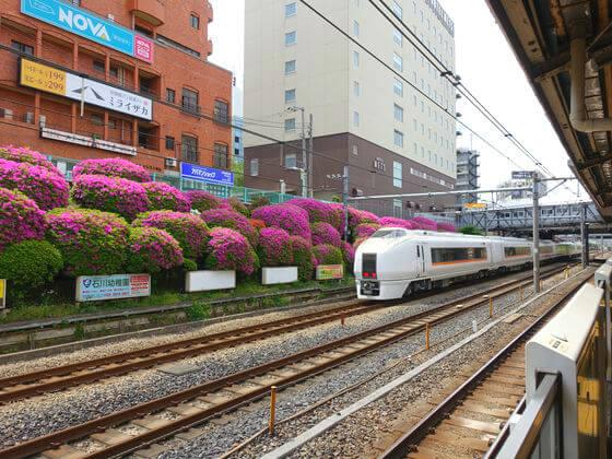 駒込駅 躑躅
