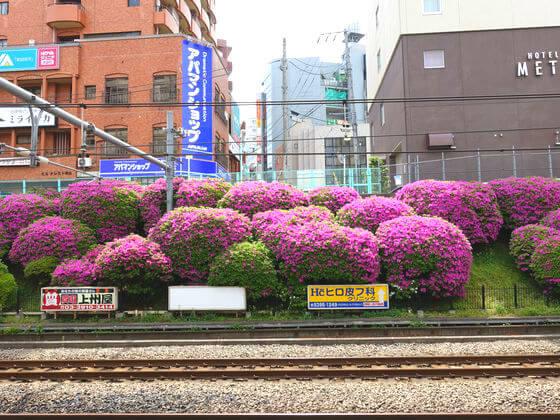つつじ 駒込駅