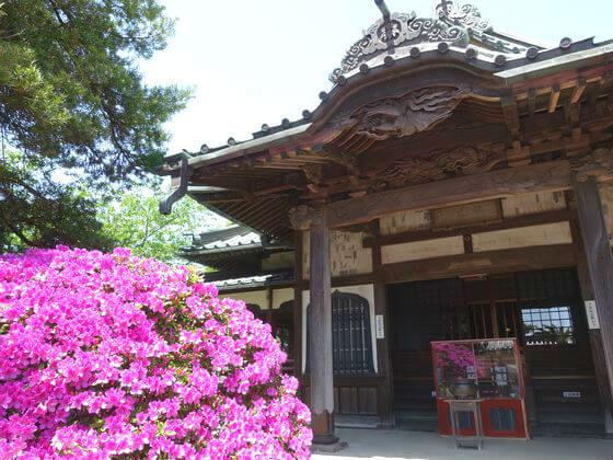 安養院 鎌倉 躑躅
