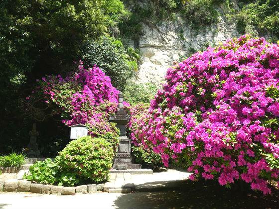 安養院 宝篋印塔 ツツジ