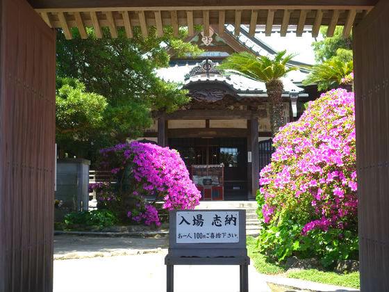 鎌倉 安養院 躑躅